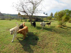 sigor-2016-perros