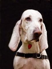 perros-sentidos-1